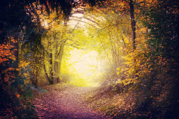 Magical Path In Autumn Park Magical Path In Autumn Park glade stock pictures, royalty-free photos & images