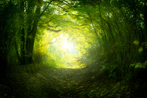 Magical path in summer