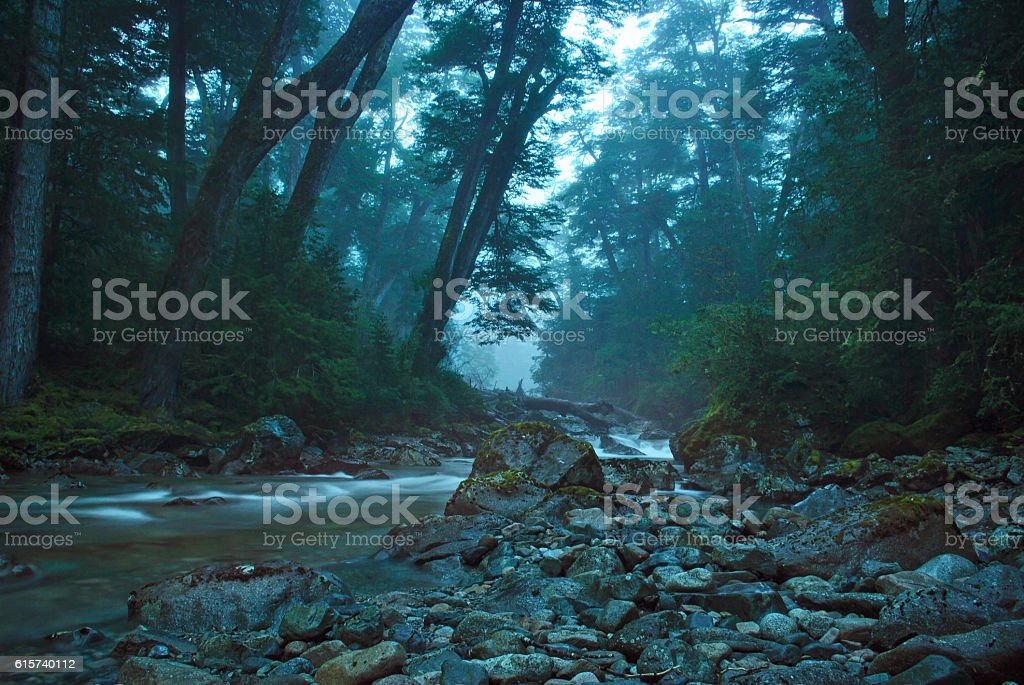 Magical scenery stream crossing the dense forest foto