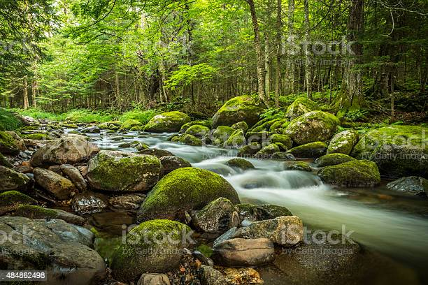 Photo of Magical stream in the heart of the green forest
