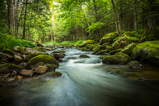 Nature beauty of the forest. Stream in the heart of the green moss forest. Mountain stream.