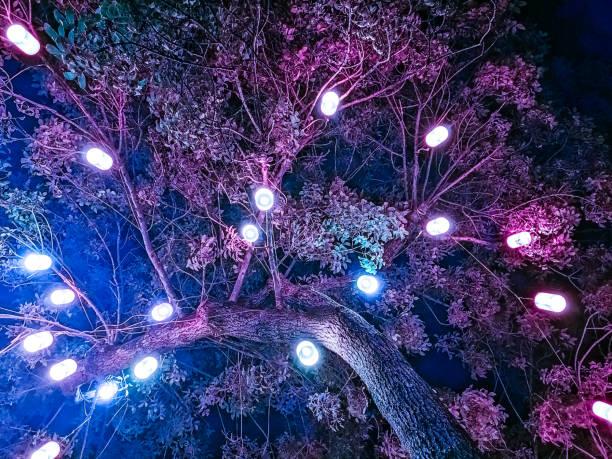 Árbol mágico que tiene una sensación etérea con colores magenta y púrpura - foto de stock