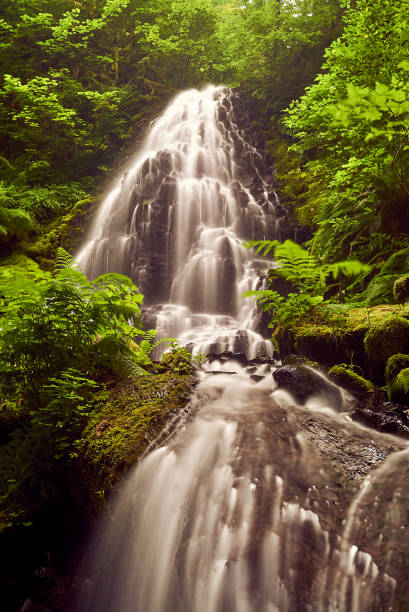 Magical waterfall with water cascading down the dark rocks with shimmering greenery surrounding it. stock photo