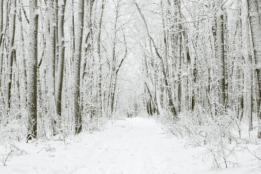 Magical winter forest during a snowfall. Camping. Picturesque nature.