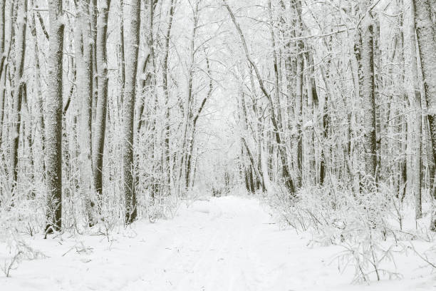 magical winter forest during a snowfall. camping. picturesque nature. - schönste reiseziele der welt stock-fotos und bilder