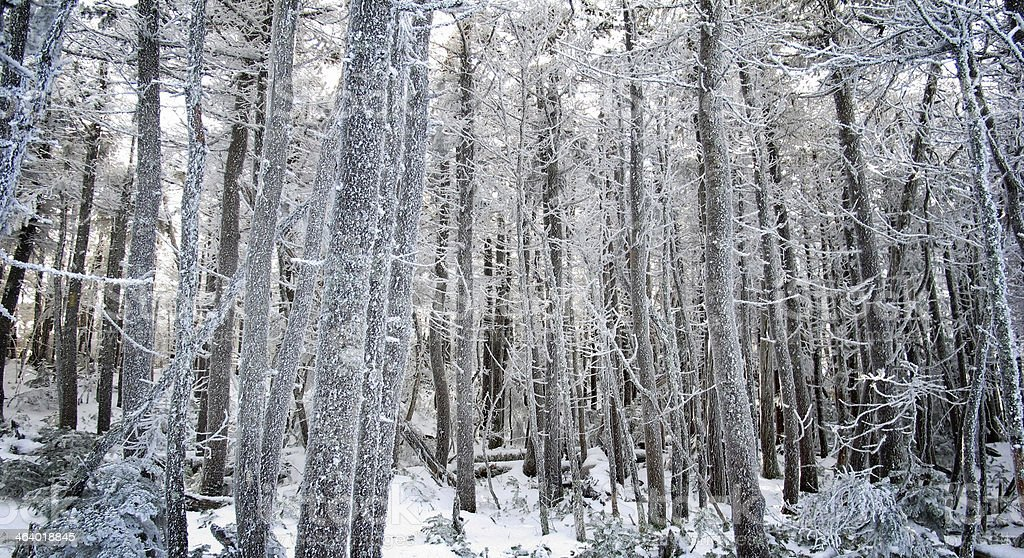 Magical Winter Forest stock photo