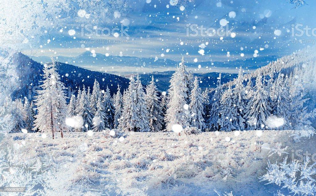 Magico albero invernale coperto di neve sfondo con un for Foto inverno per desktop