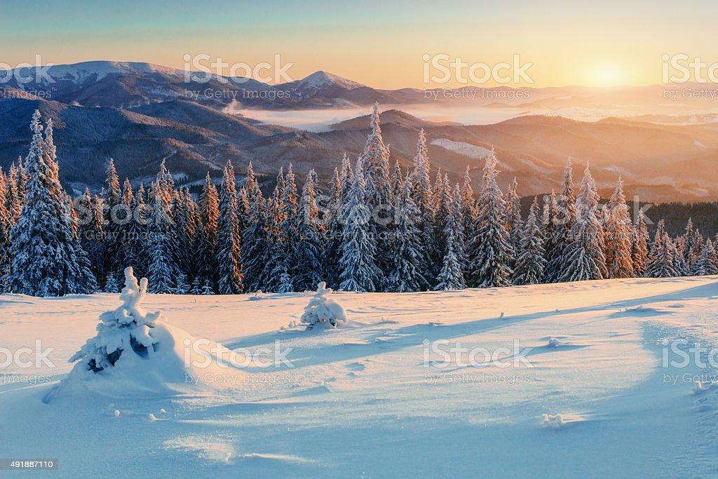 Zauberhafter winter mit Schnee bedeckten Weihnachtsbaum – Foto