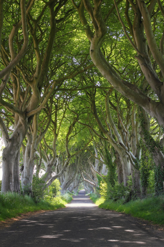 Magical Woods Of Dark Hedges Stock Photo - Download Image Now