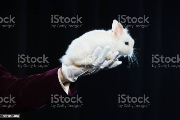 Magician with rabbit juggler man funny person black magic illusion on picture id882046480?b=1&k=6&m=882046480&s=612x612&h=zf3opquwe82tw8cui8 a8u ebpvv hfuhhmmmrzk27y=