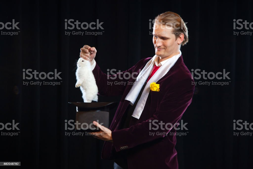 Magician with rabbit, Juggler man, Funny person, Black magic, Illusion on a black background pulls by the ears stock photo