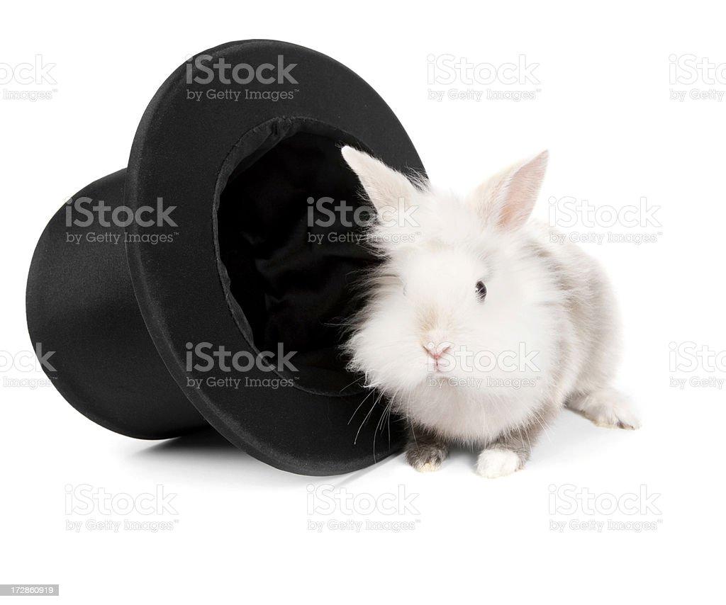 magician's rabbit royalty-free stock photo