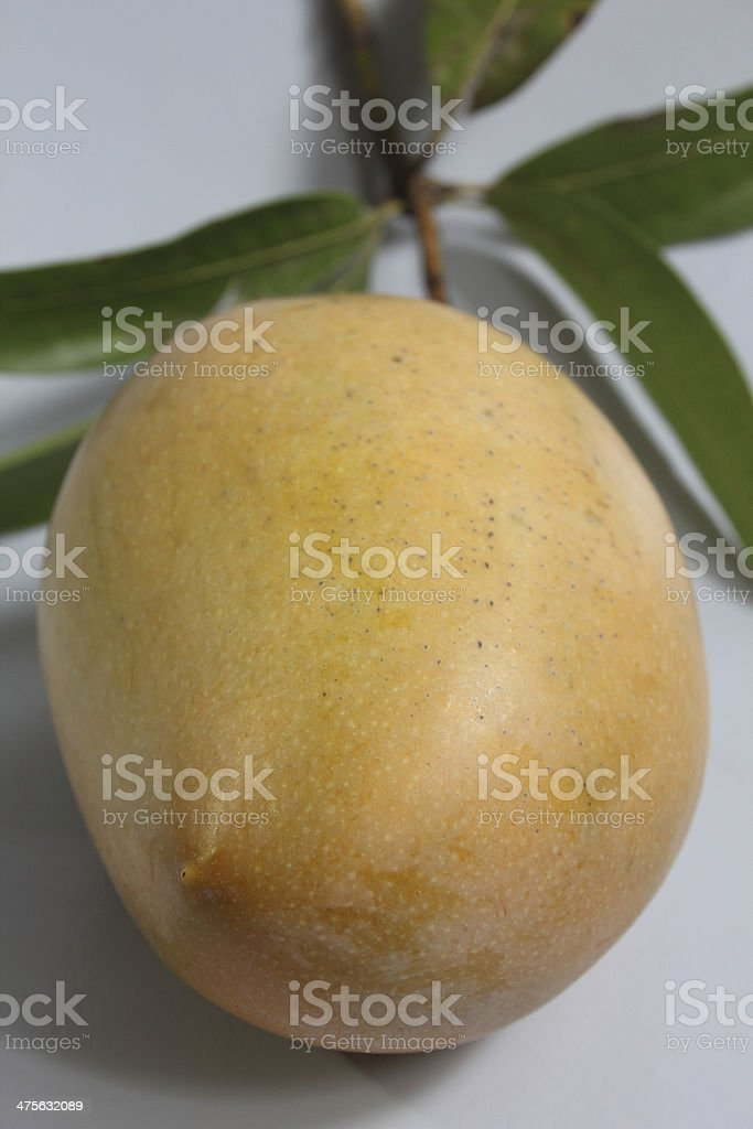 Magnifera Indica, Totapuri Mango stock photo