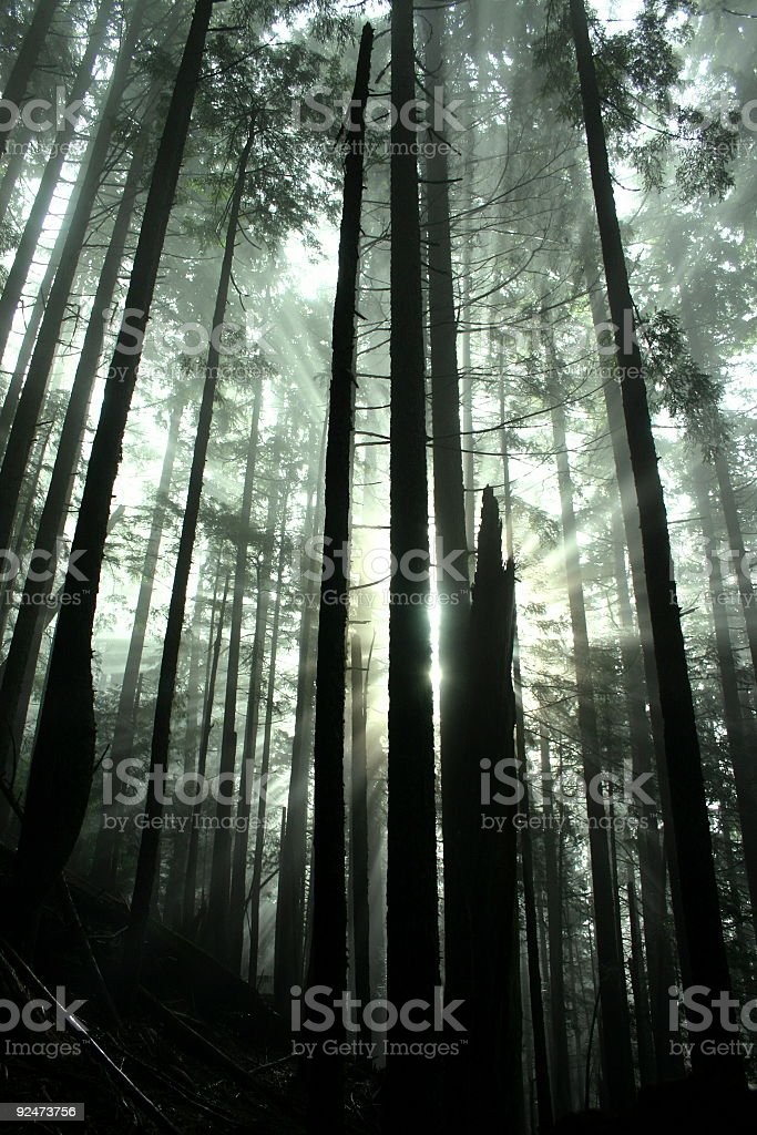 Magnificence In The Forest royalty-free stock photo