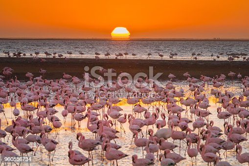 Magnificent flamingos in Namibia