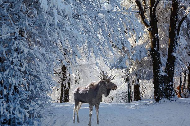 Herrliche Moose haben für Sie – Foto