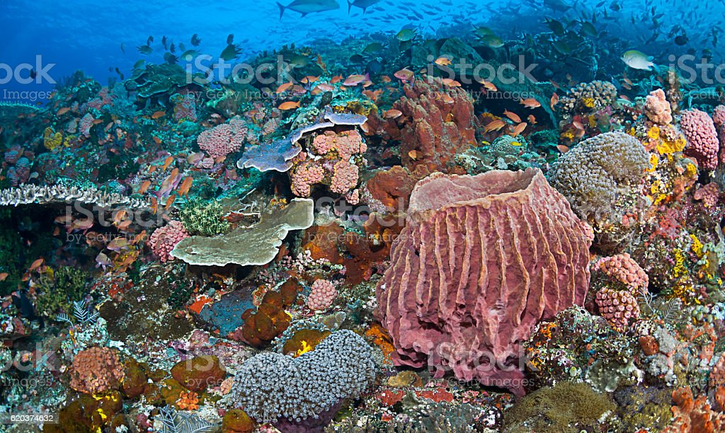 Magnificent Reef Scene foto de stock royalty-free