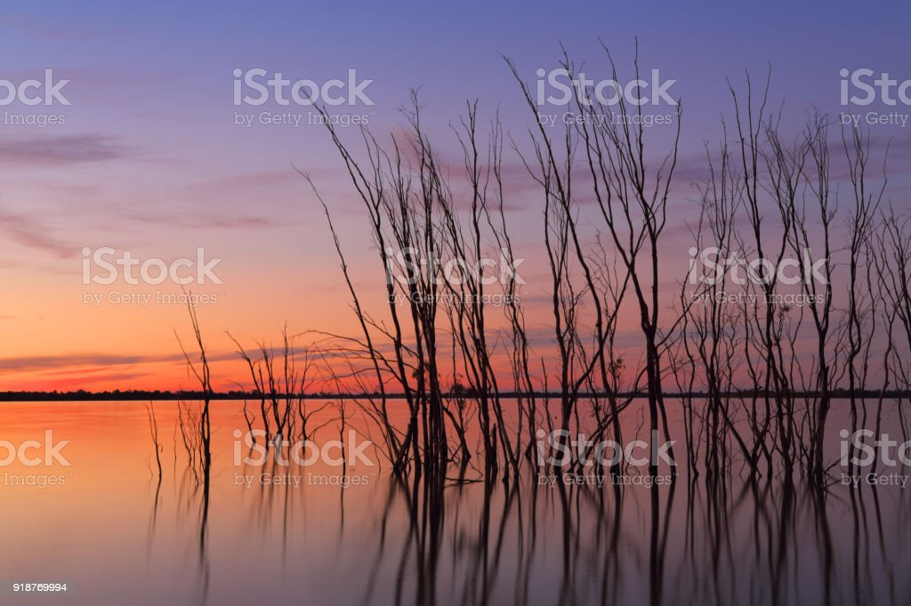 Magnificent sunset on the lake with silhouetted trees stock photo