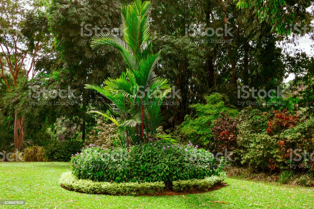 Magnificent tropical park with beautiful trees and flowers. stock photo