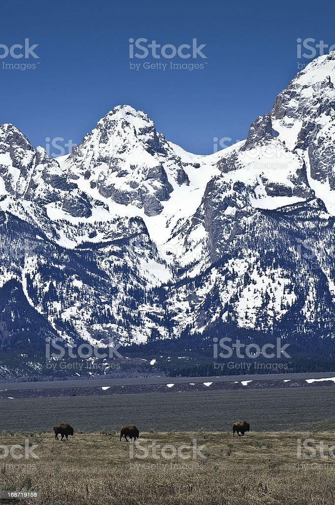 Magnificent Winter Tetons royalty-free stock photo