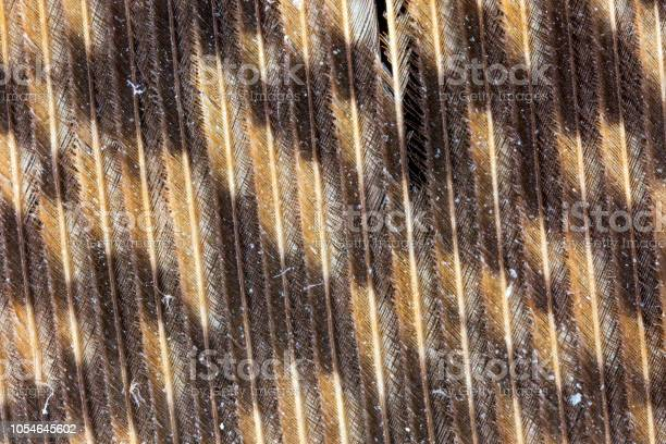 Magnified view of a great horned owl feather picture id1054645602?b=1&k=6&m=1054645602&s=612x612&h=c58ebrih fvhsjyd dgyckfagvdbdro53r1esl5izma=