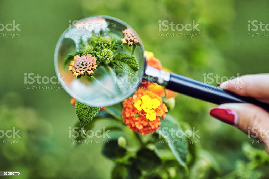 magnifier on a background of green vegetation stock photo