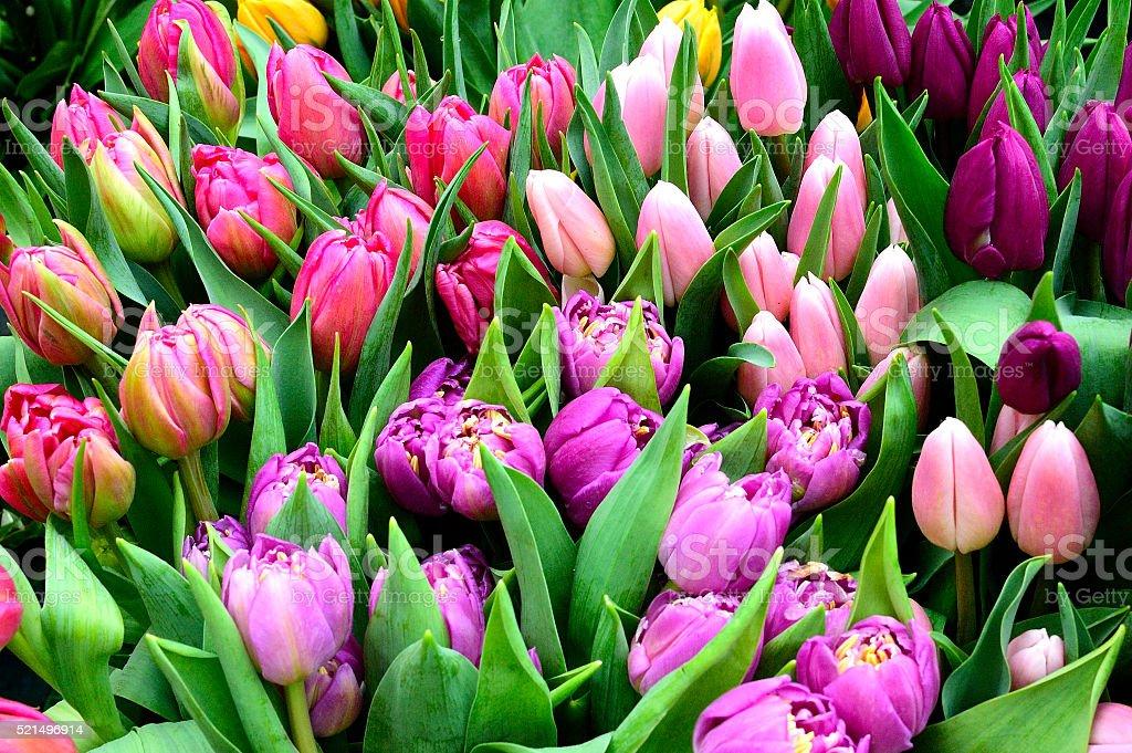 Magnifiques bouquet de tulipes stock photo