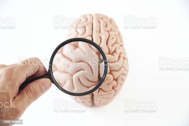 Magnifying glass and brain model on white background picture id1066199694?b=1&k=6&m=1066199694&s=612x612&h=ub6o9b0kjrogmz5qt6uspqex aqfic cbrjzxztbhu8=
