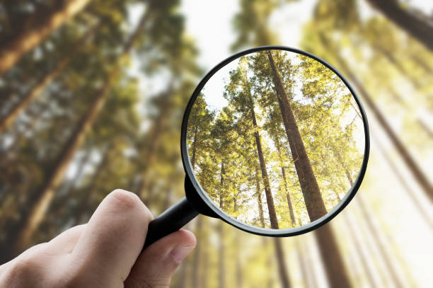 Magnifying glass focusing a forest stock photo