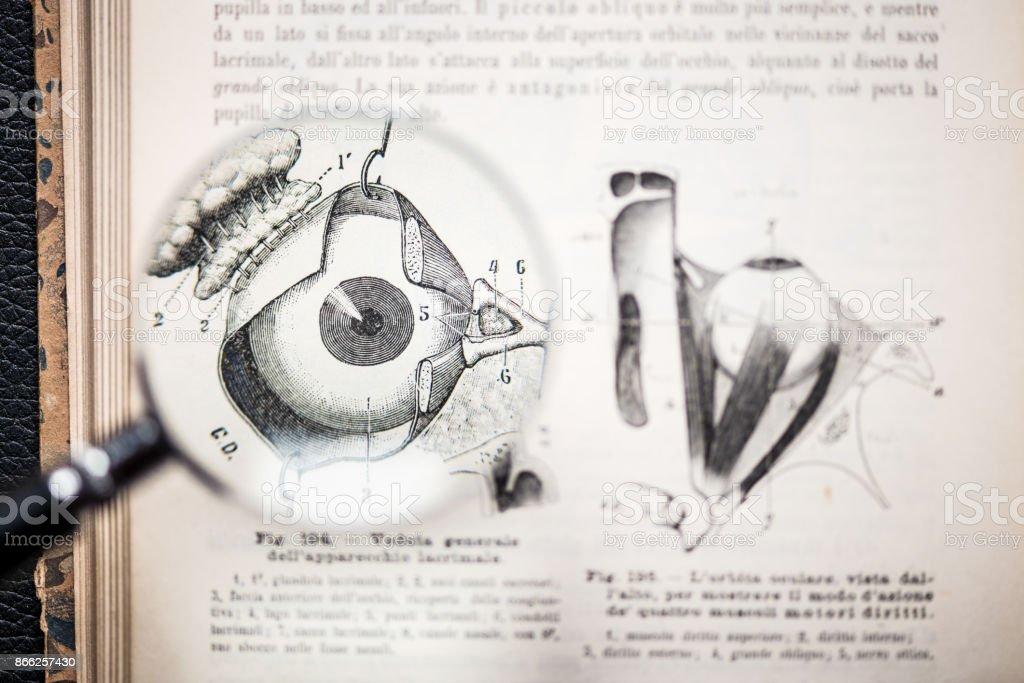 Lupe Auf Antiken Anatomie Buch Auge Stock-Fotografie und mehr Bilder ...