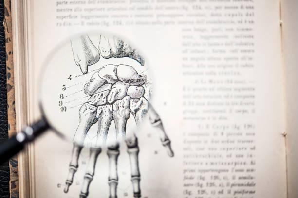 lupe auf antiken anatomie buch: knochen der hand - anatomie buch stock-fotos und bilder