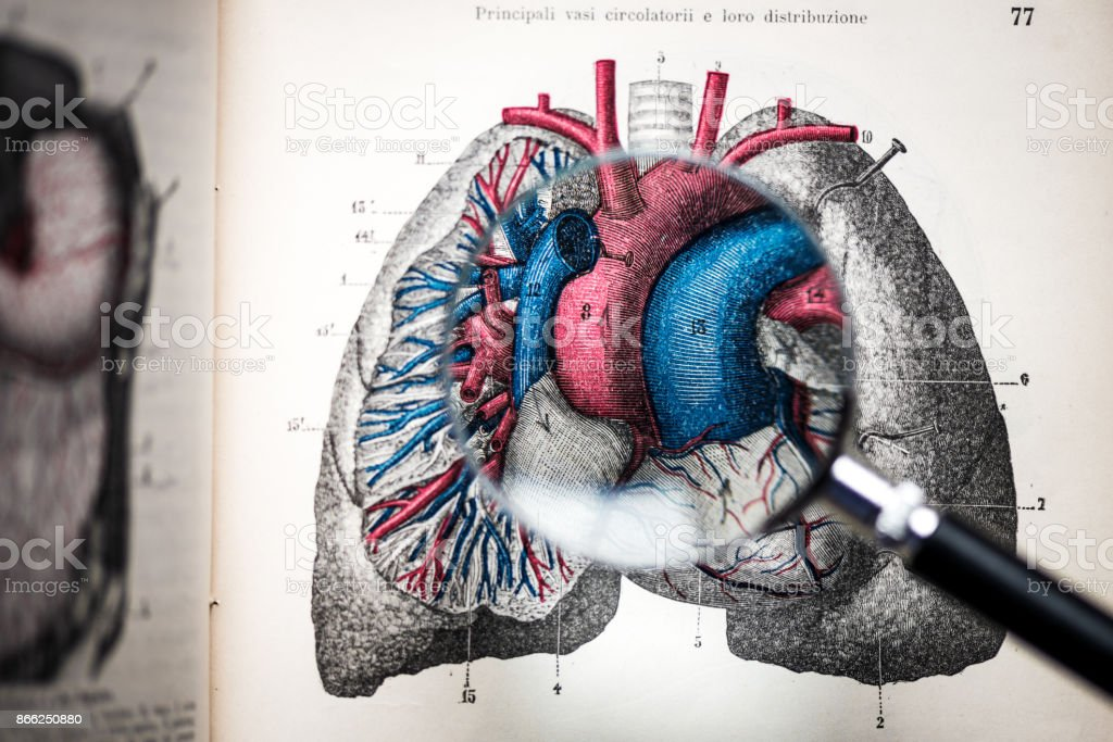 Magnifying glass on antique anatomy book: Heart and lungs stock photo