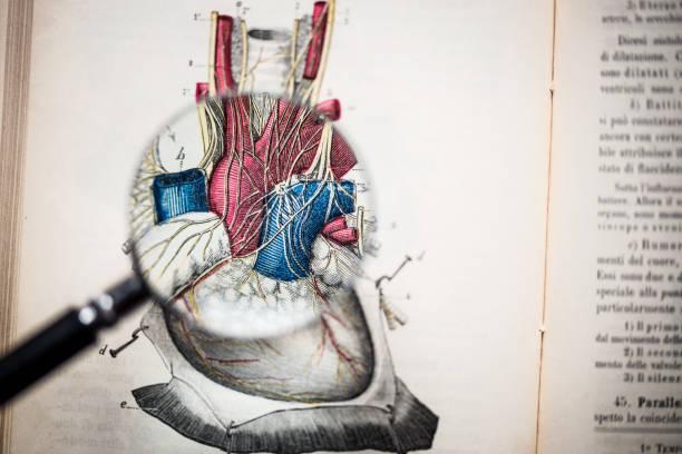 lupe auf antiken anatomie buch: herz - anatomie buch stock-fotos und bilder