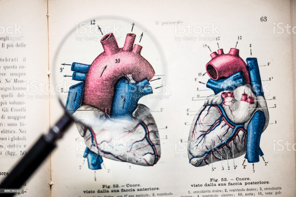 Magnifying glass on antique anatomy book: Heart stock photo