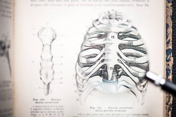 lupe auf antiken anatomie buch: brustkorb - anatomie buch stock-fotos und bilder