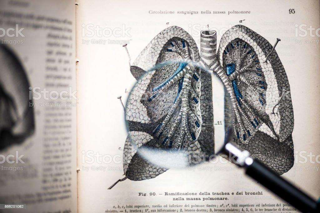 Lupe auf antiken Anatomie Buch: Luftröhre, Bronchien und Lunge – Foto