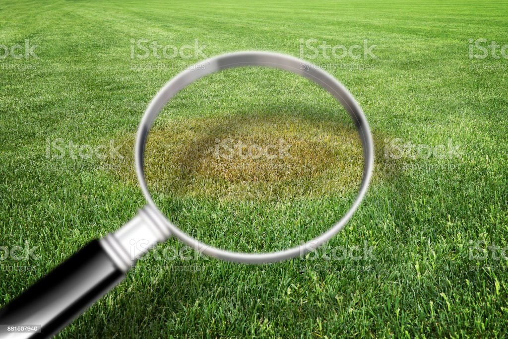 Magnifying glass with green grass background - Grass disease concept image stock photo