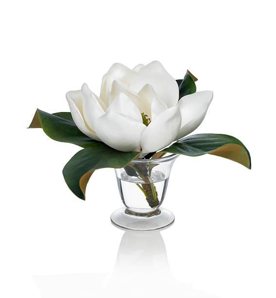 Single Flower White Background Wallpaper