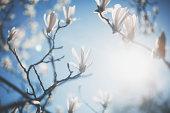 Blossom tree flowers. Shallow DOF - focus on the centre