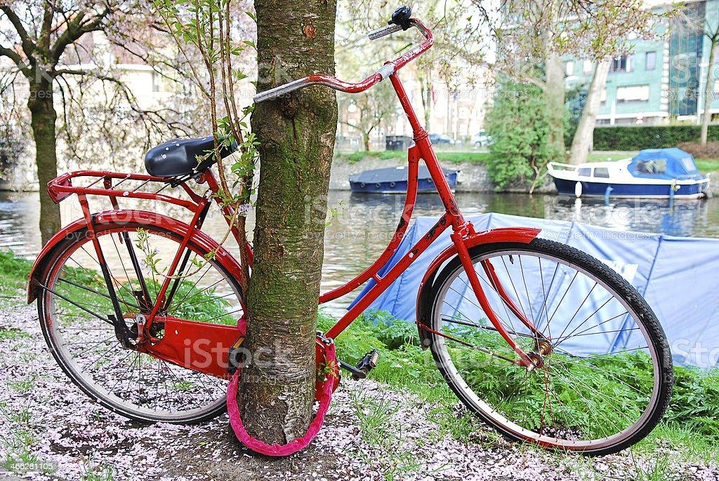 Магнолия цветы на велосипеде. стоковое фото