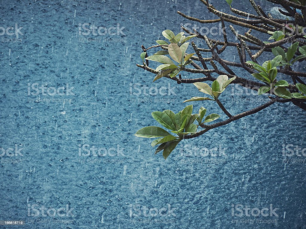 magnolia branches at water background royalty-free stock photo