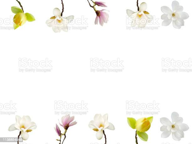 Magnolia flower isolated on white background picture id1138854548?b=1&k=6&m=1138854548&s=612x612&h=oe8zxdkuvd 860qpwkdpivpk5iq0ofgul1p 7igd1nu=