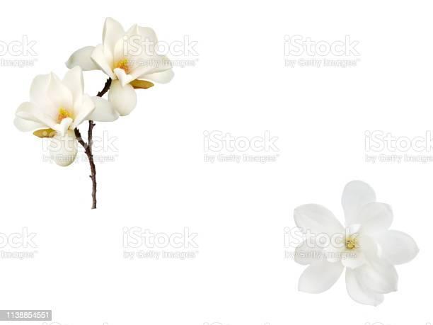 Magnolia flower isolated on white background picture id1138854551?b=1&k=6&m=1138854551&s=612x612&h=0corpkhm1ku5imeanptlibo5hkqi49b trvuqigs8uk=