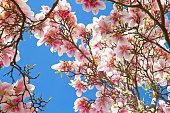 「Magnolia 」の春の時間