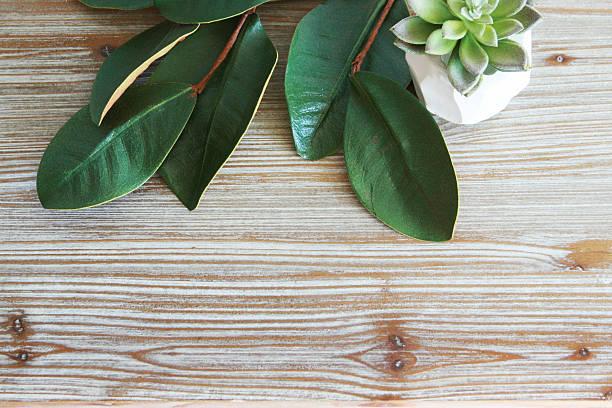 magnolia leaves wood grain background - magnolia стоковые фото и изображения