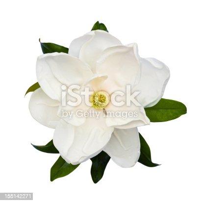 White magnolia flower isolated on white.
