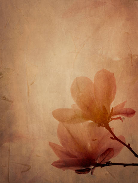 magnolia - blumendrucktapete stock-fotos und bilder