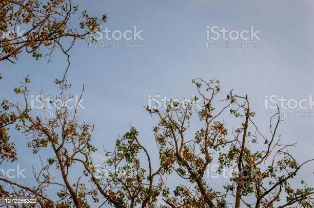 Photo of Magpies in a tree