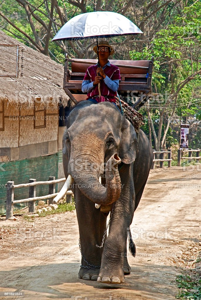 Mahout and his elephant going to work stock photo