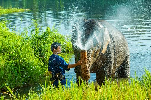 istock Mahout training elephant 941411782